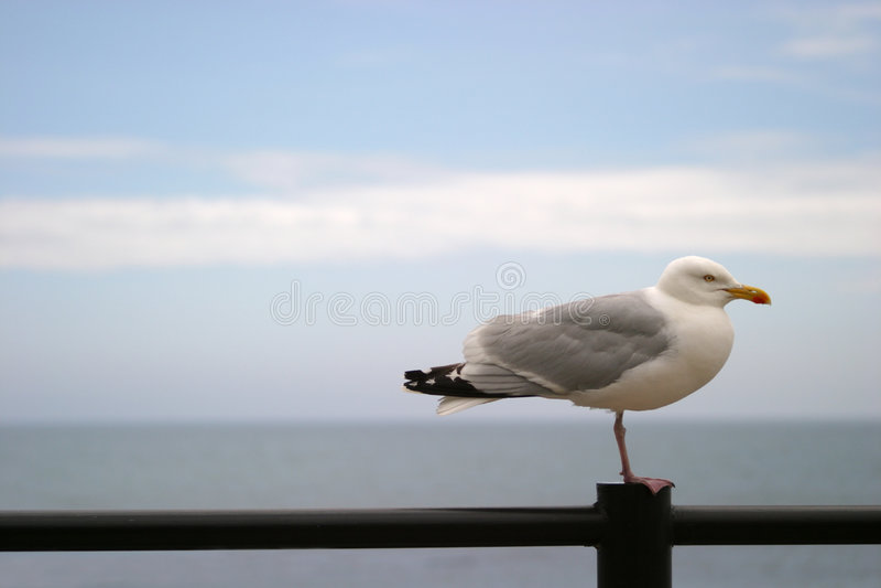 Seagull on railing royalty free stock photo