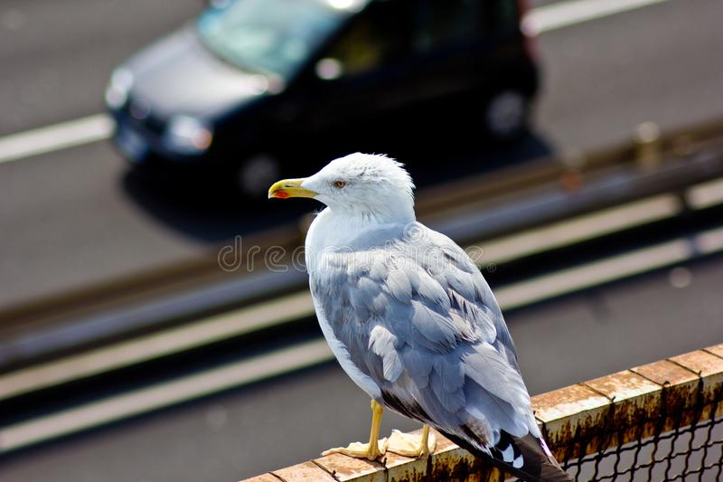 Seagull resting on a crate royalty free stock photos