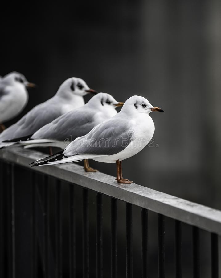 Seagull resting on rail stock photos