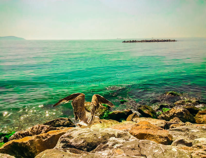 Seagull resting on a rock overlooking the sea. Seagull resting on a rock royalty free stock image