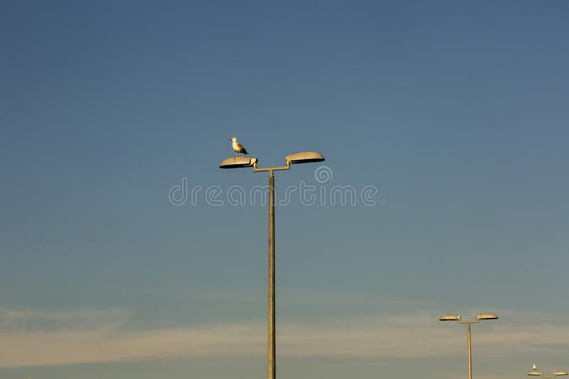 Seagull on the lamp. Seagull resting on the street lamp stock photos