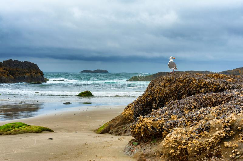Seagull on Rock at beach royalty free stock photos