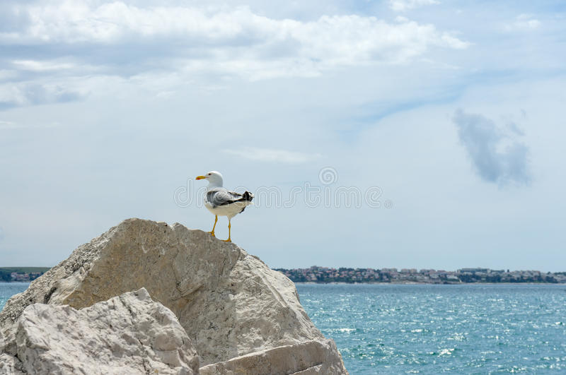 Seagull on rock near sea stock photos