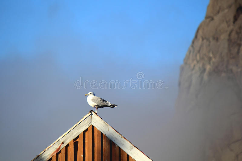 Download Seagull  on the roof stock image. Image of mountains - 27772821