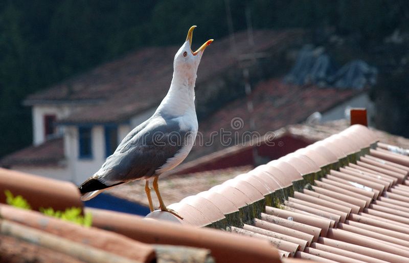 Download Seagull on a roof stock photo. Image of feather, white - 3937972