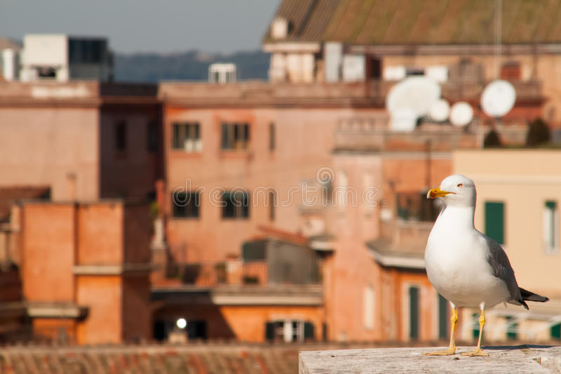 Seagull on Roof stock photography