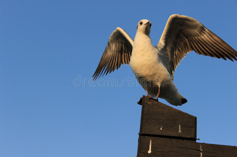 Seagull on the roof royalty free stock photos