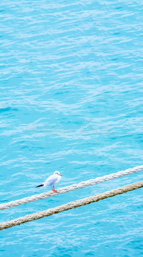 Seagull on the rope. Ship rope. Sea port. Jetty. royalty free stock photography