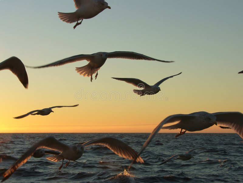 Seagull's chase stock photography