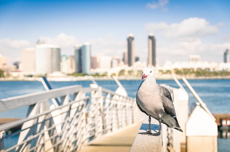 Seagull at San Diego waterfront with skyline view stock images