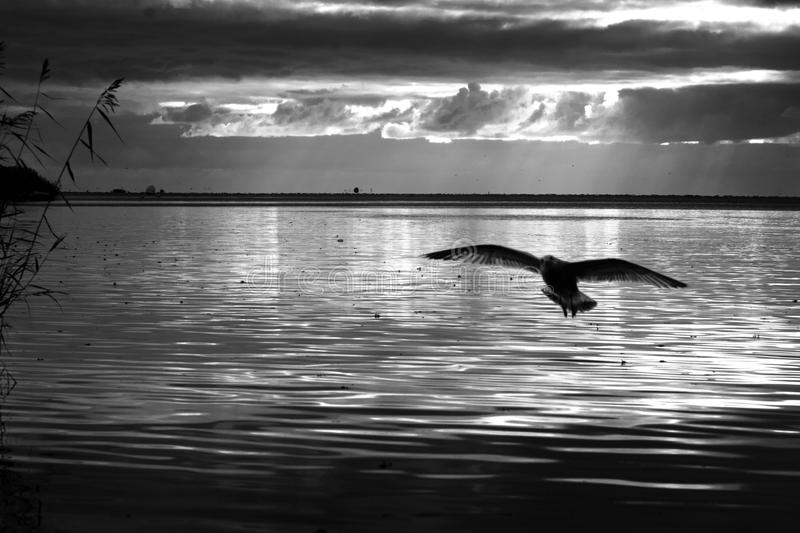 The seagull and the sea stock images