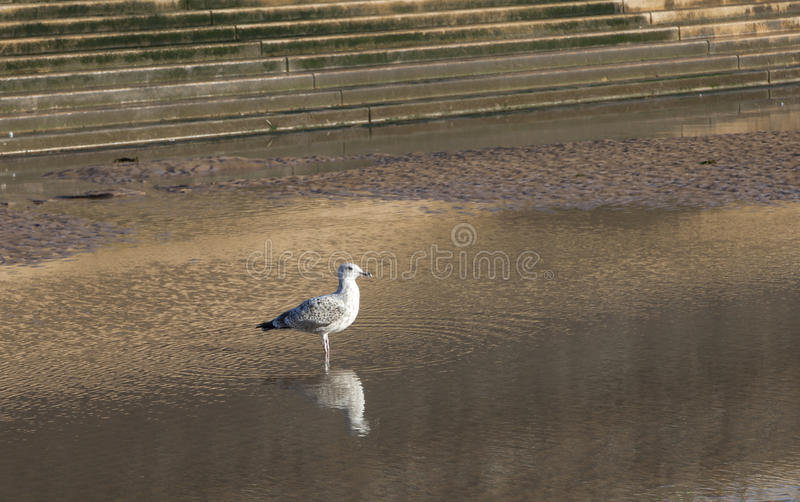Download Seagull on sea front stock photo. Image of long, blue - 29221638