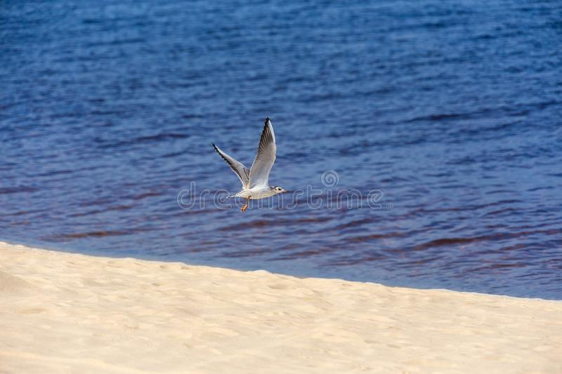 Seagull, sea and sand royalty free stock images