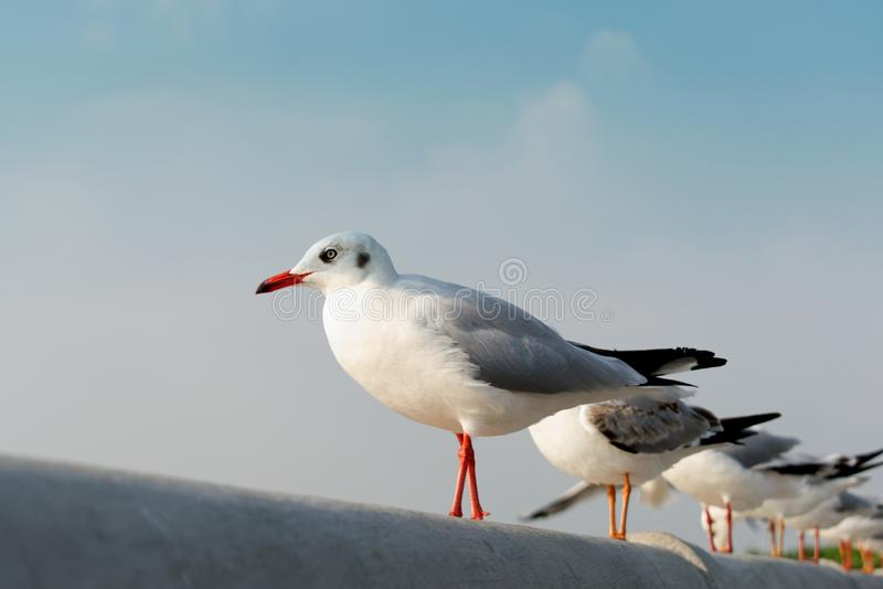 Seagulls standing in a row looking to the sky royalty free stock photo