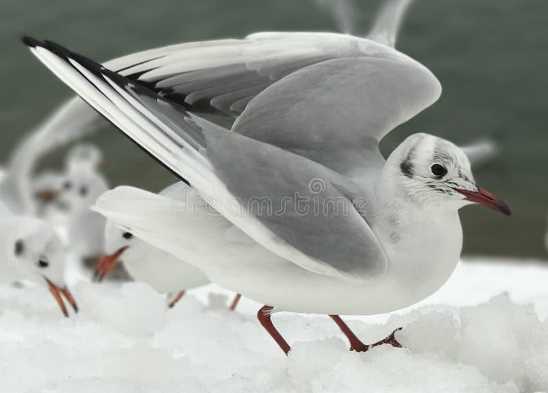 Seagull selfie! στοκ εικόνα