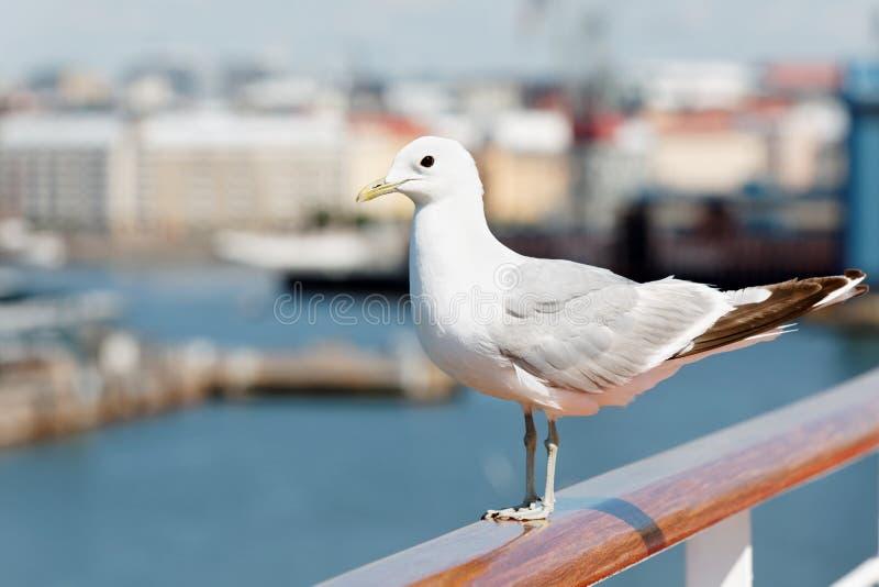 Seagull siedzi na poręczu. zdjęcia stock