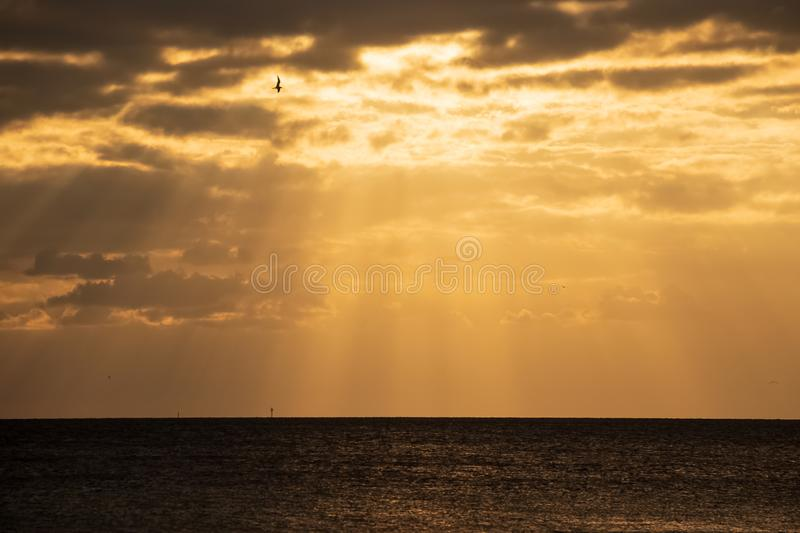 Seagull silhouette as it flies through the sunbeams at sunet on Fort Myers Beach, FL. At Gulf of Mexico beach stock photography