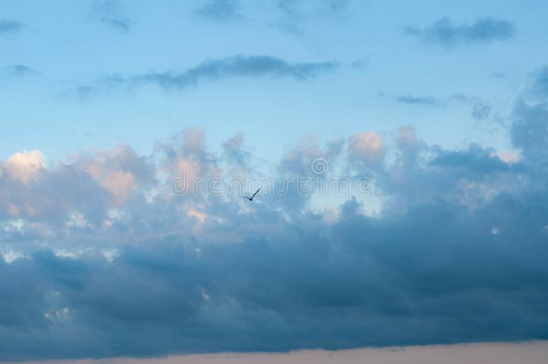 Seagull silhouette in picturesque cloudy sky. Above calm sea in violet dusk evening with blue and lilac clouds in clear light blue sky with touch of pink royalty free stock photos