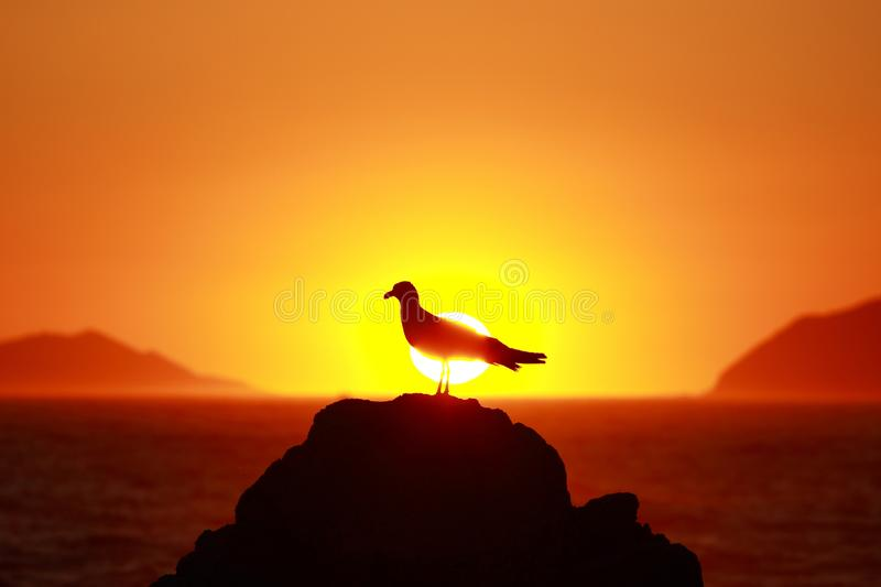 Seagull silhouette on sunset, Adriatic sea in Croatia, taken from Island Lokrum near Dubrovnik stock photos