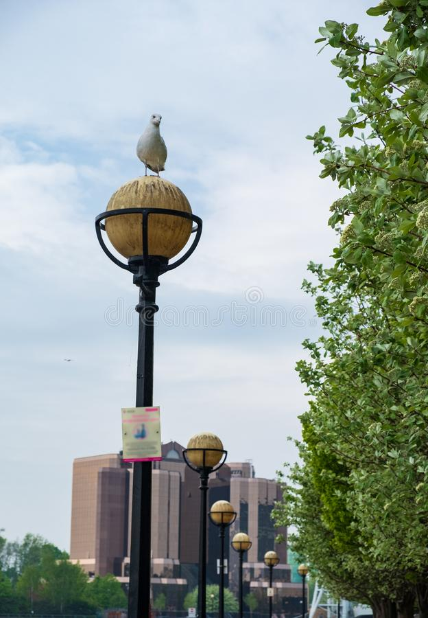 A seagull sits o a streetlight at Salford Quays in Manchester stock photos