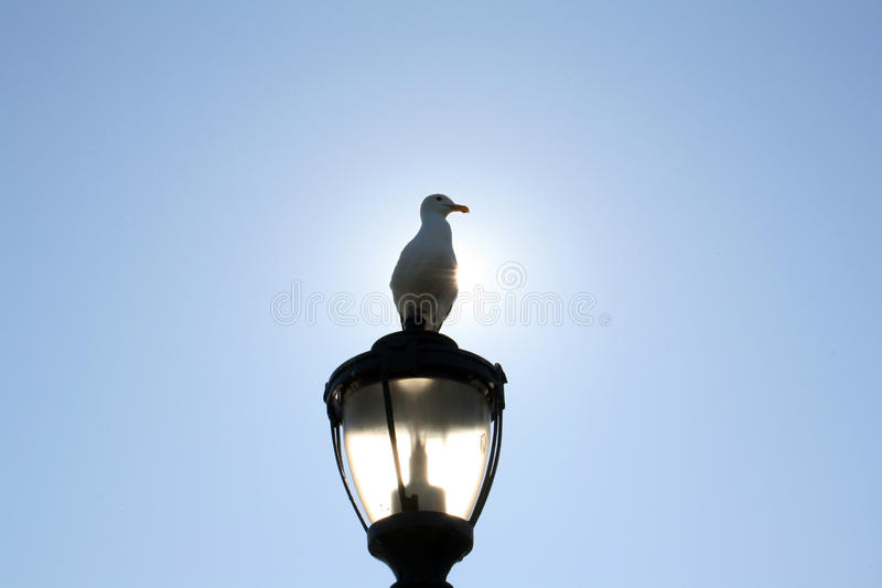 Seagull is sitting on the light royalty free stock photos