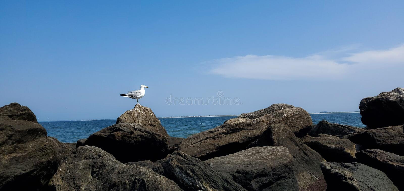 Seagull sitting on rocks by ocean stock photography