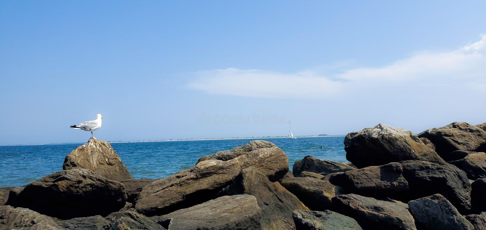 Seagull sitting on rocks by ocean royalty free stock photography