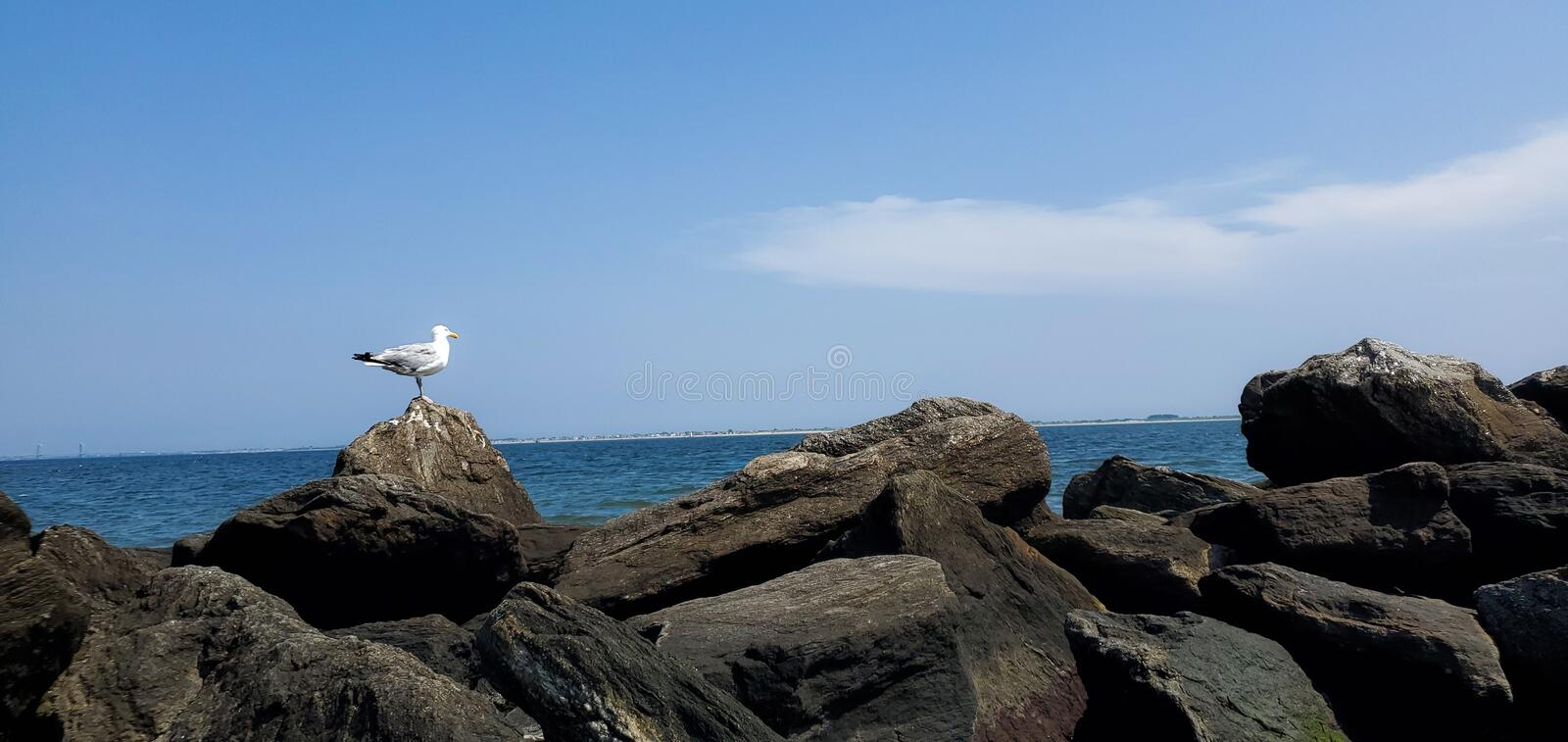 Seagull sitting on rocks by ocean royalty free stock photo