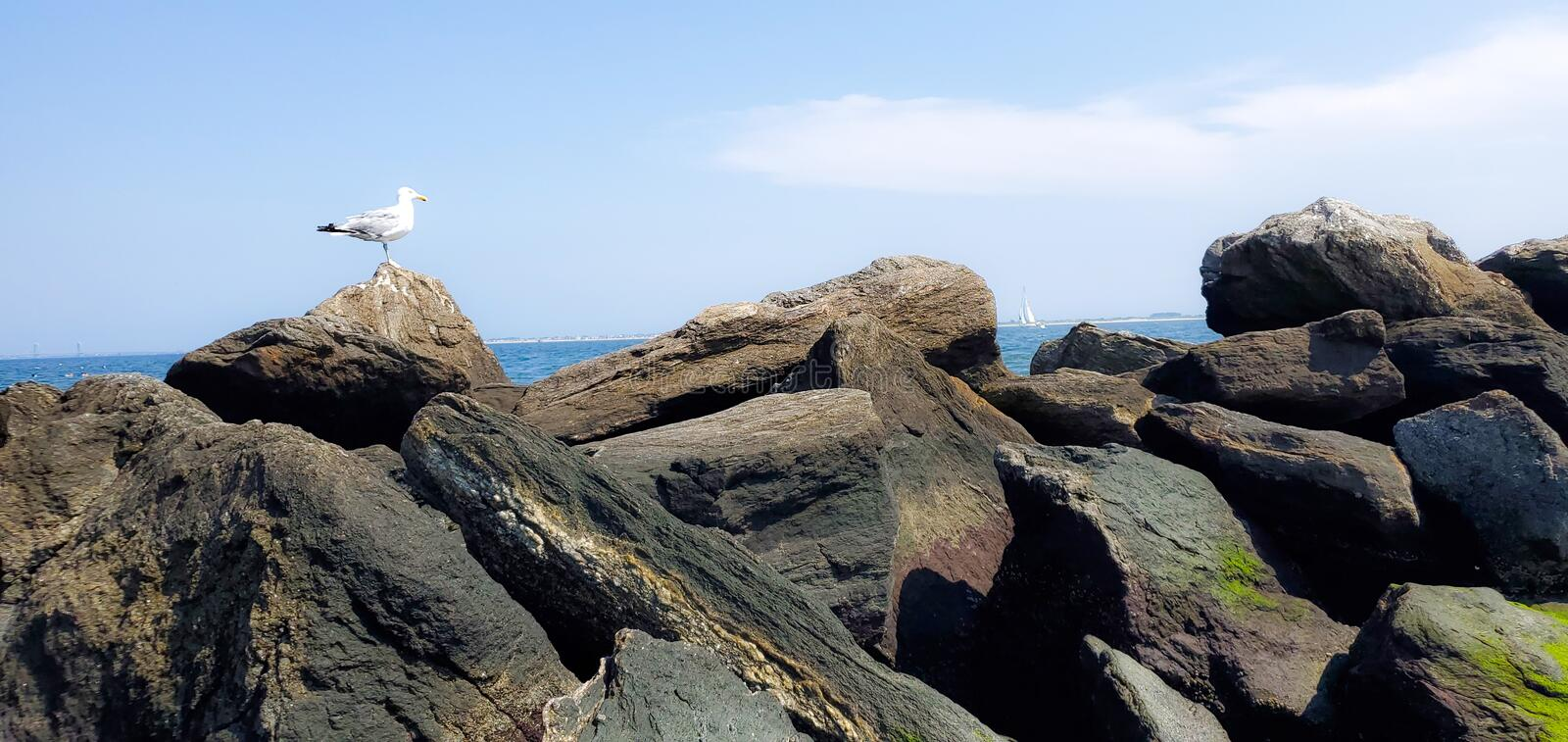 Seagull sitting on rocks by ocean royalty free stock photos