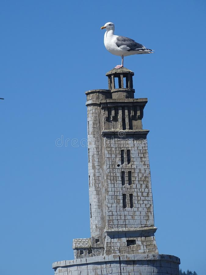 Seagull sitting on wood lighthouse stock photo