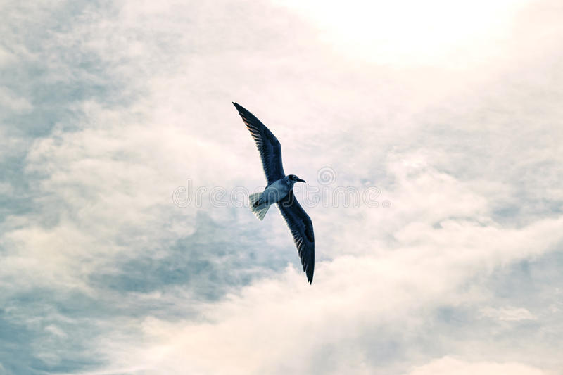 Seagull in the sky. Bird fly high like an angel stock photo