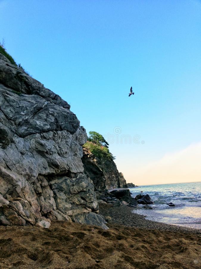 Seagull in the sky over the sea royalty free stock images