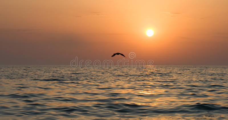 Seagull Soaring Stock Photos