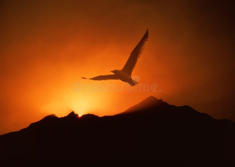 Seagull soaring above sunrise royalty free stock photos