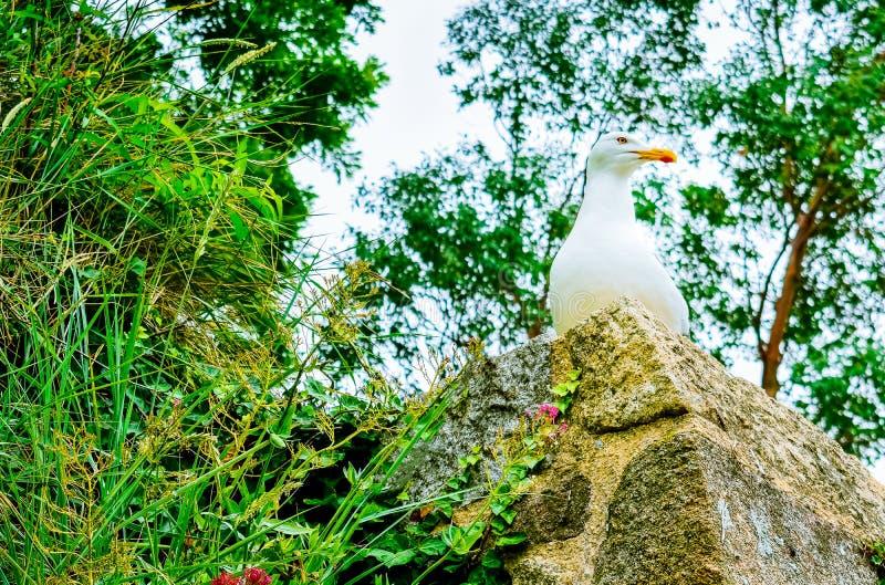 Seagull som överst poserar av en sten och omger av en grön miljö och blommor royaltyfria foton