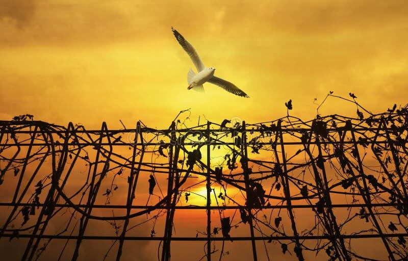 Seagull som flyger det ovannämnda metallstaketet med torra sidor över solnedgånghimmel royaltyfria bilder