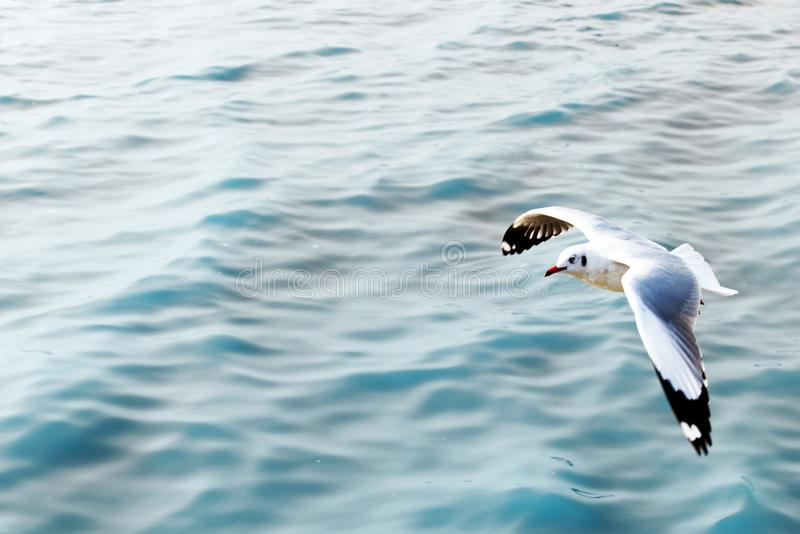 Seagull som flyger ?ver det bl?a havet fotografering för bildbyråer