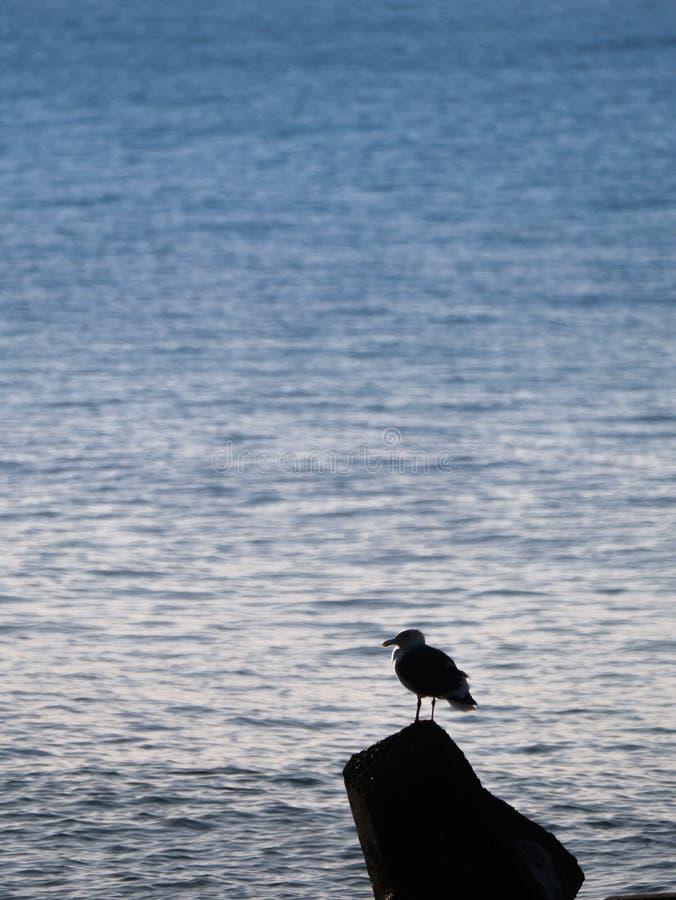 Seagull som i stillhet står på en vagga arkivbilder