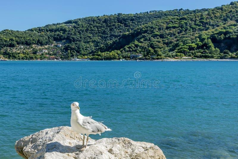 Seagull som poserar med på bakgrunden ön av Palmaria, Portovenere, Liguria, Italien arkivbilder