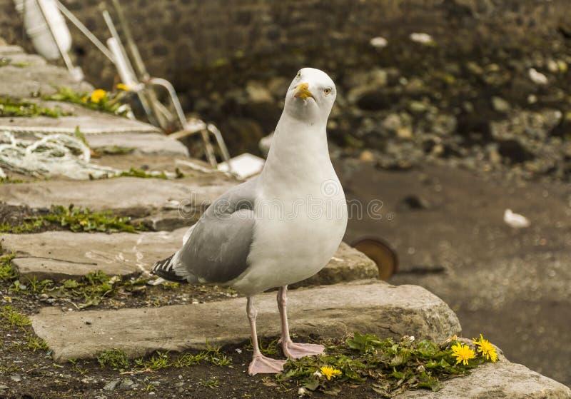Seagull som ser fråga royaltyfri fotografi