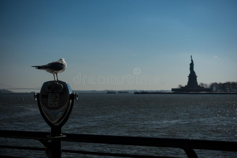 Seagull standing at binoculars on Ellis island looking at the statue of liberty in the distance royalty free stock photography