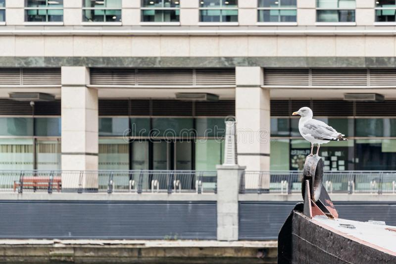 A seagull standing on boat with modern buildings in Canary Wharf royalty free stock photo