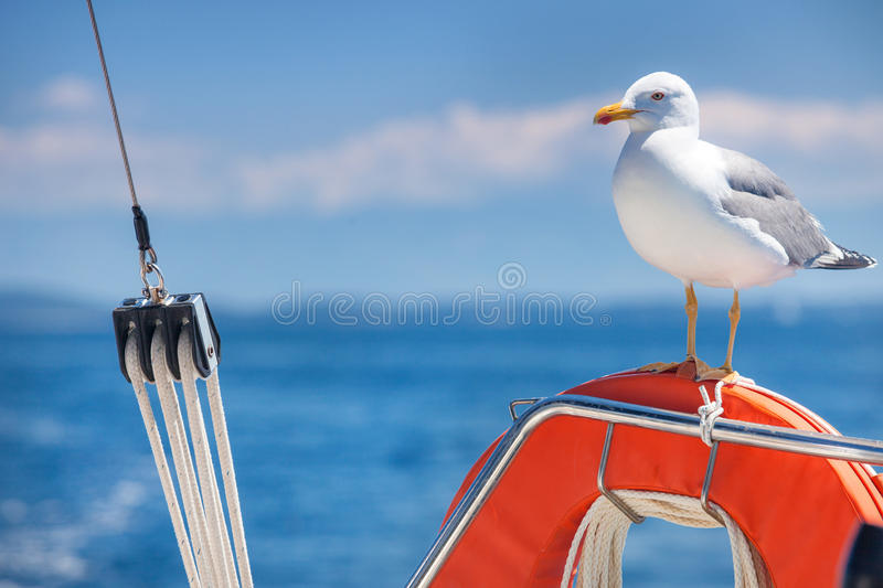 Seagull standing on the orange lifebelt. Against the blue sky royalty free stock photos