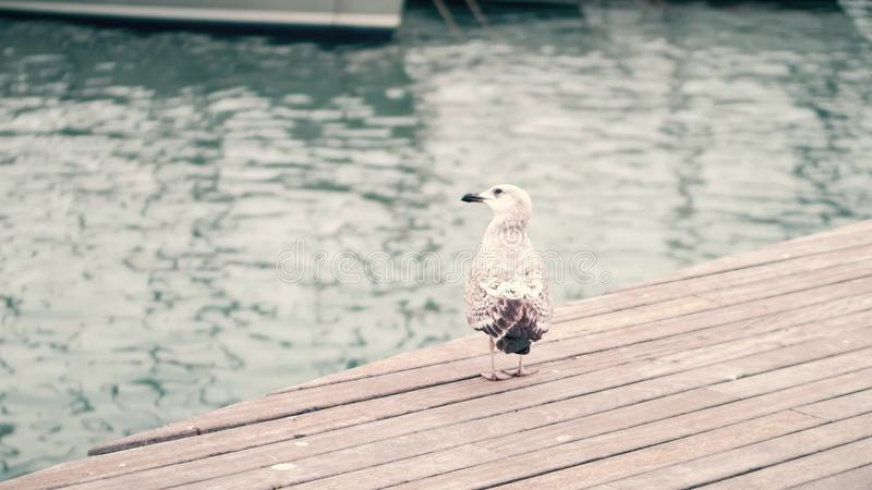 Seagull standing on the pier against blurred water ripple stock photos