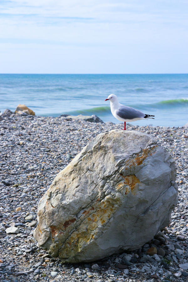 Free Seagull Standing Single-footed On Beach Rock Royalty Free Stock Images - 54149339