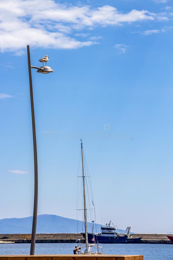 Seagull on a street lamp at Kavala, Northern Greece royalty free stock image