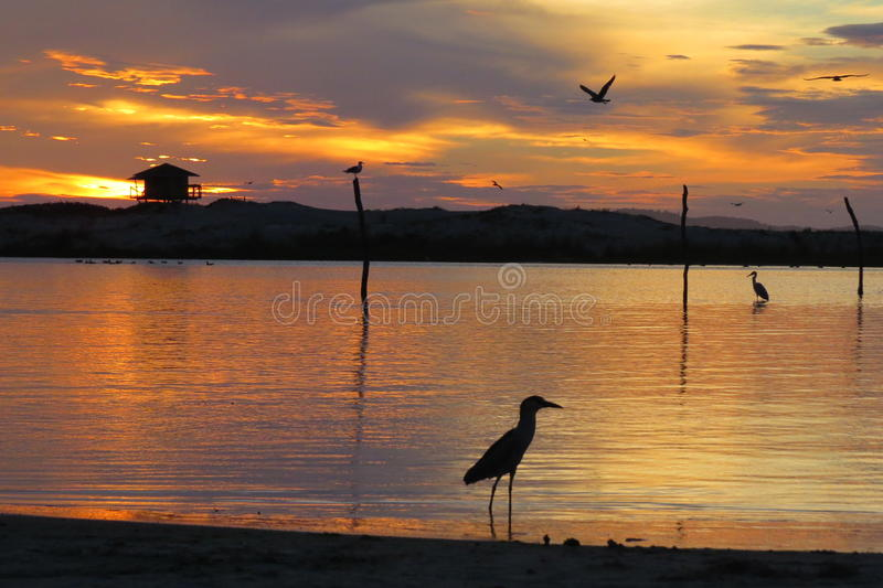 Seagull in stunts sunrise on the beach royalty free stock images