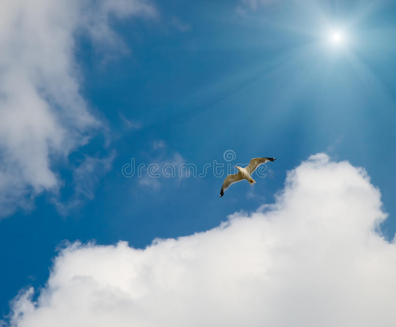 Seagull And Sun Stock Images