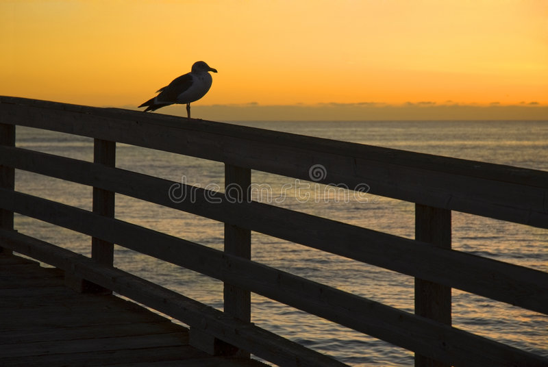 Download Seagull During Sunset Royalty Free Stock Photo - Image: 2251925