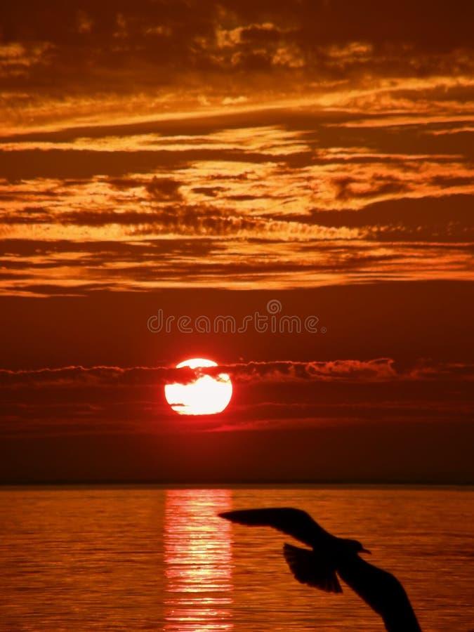 Seagull, sunset, sea stock image